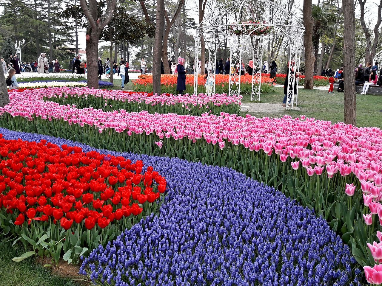 Emirgan park, Turkey Istanbul tulip festival in april